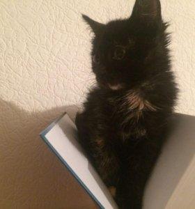 Котёнок ( Девочка)