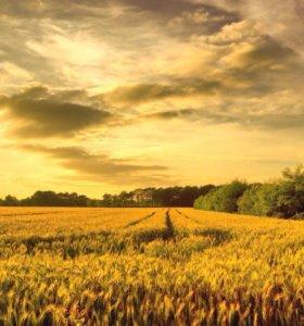 Участок, 32000 сот., сельхоз (снт или днп)