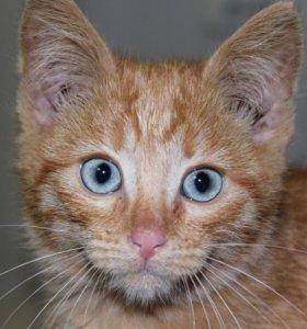 Котенок в добрые руки Патрик, котик дар