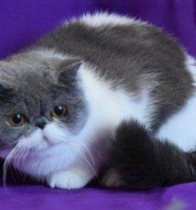 СЕРДЦЕфицированный кот