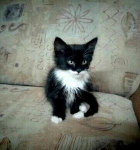Отдам котенка в добрые ,ответственные руки