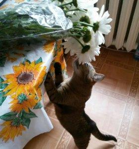 СРОЧНО!!!Кошка, в добрые руки!!!!