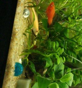 Рыбки и аквариумы