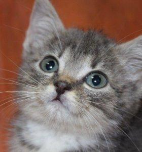 Котенок в добрые руки Сима, кошка в дар