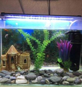 Аквариум с аксессуарами и рыбками