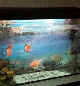 аквариум с рыбками срочно
