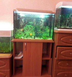 Три аквариума с рыбками