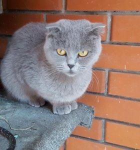 Отдам в заботливые руки котенка и кошку.