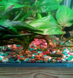 Растения для аквариумов
