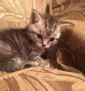 Предлагаются к продаже плюшевые котята!