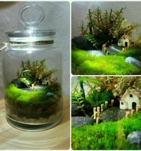 Флорариум в подарок, сад, мох