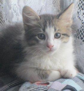 Котята от кошки мышеловки в добрые руки