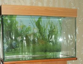 Аквариумный комплект 70л и рыбки