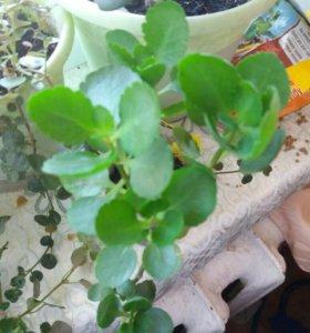 Растения комнатные