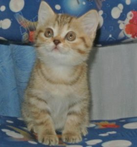 Чудо- котёнок