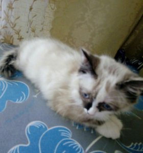 Милейшая кошечка-котенок