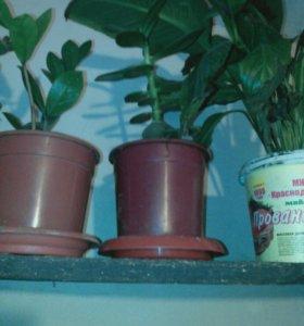 Детки комнатных растений