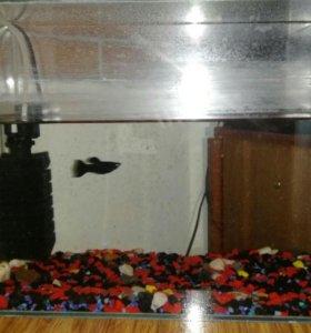 Рыбка аквариум. Полностью