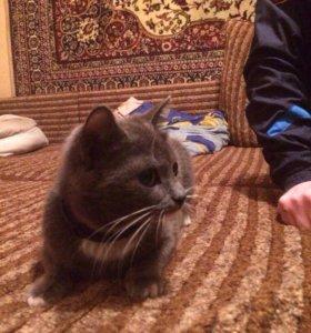 Отдам котят в добрые руки!