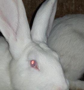 Домашнее мясо кролика к вашему столу