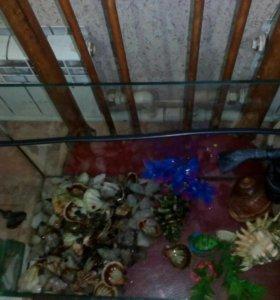 Аквариум , и ракушки , камушки,корм в подарок.