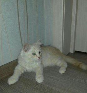 Котенок рыжий 3 мес