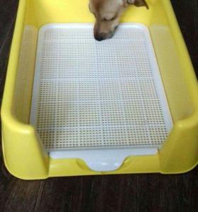 Лоток для маленьких собак или щенят.ТОРГ