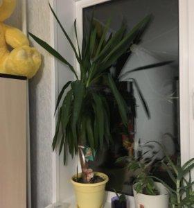 Цветок - пальма