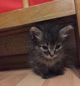 Кошки и котята бесплатно