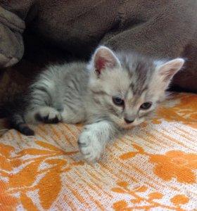 4 котёнка ищут добрых хозяев!