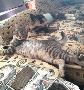 Котенок девочка, 3 месяца