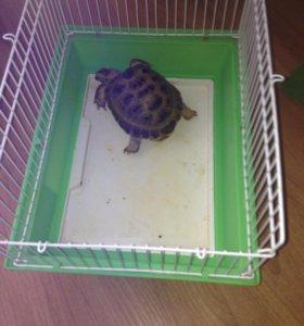Сухопутная черепаха с клеткой