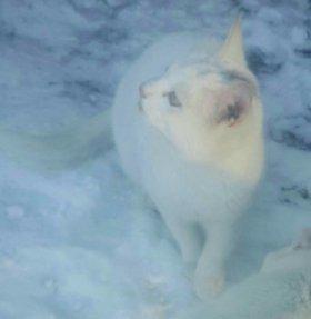 Белый котенок и белый кот