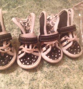 Ботиночки для собак, обувь