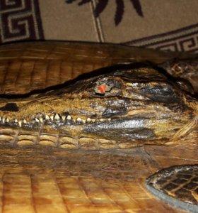 Сумка из крокодиловой кожи