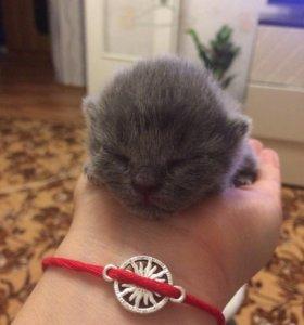 Принимаю бронь на котят