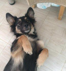 Собака, стерилизованная девочка