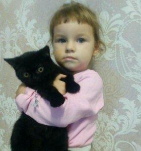 Котята , котики