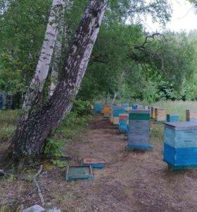 Мед натуральный и соты