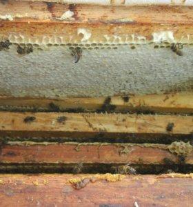 Мёд, сотовый мёд, мед с орехами