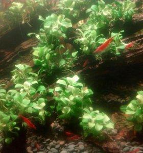 Большая мангровая коряга в аквариум