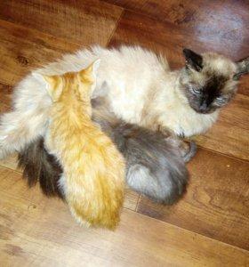 Котята 3 мес