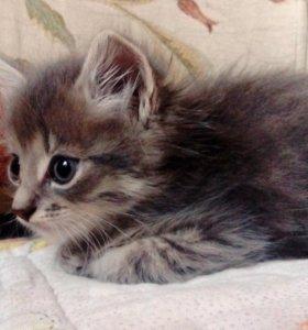 Котята милые.
