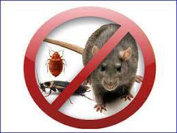 Уничтожение клопов, муравьев, грызунов 100% рез.