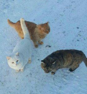 Рыжий и белый котенок