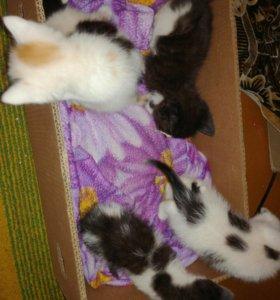 Коты даром хабаровск
