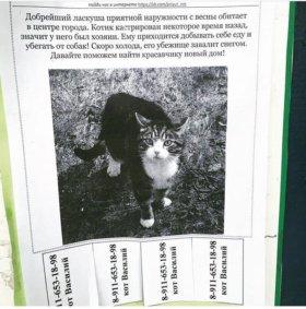 Приюти котика