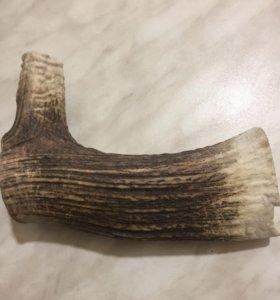 Рог оленя для собак