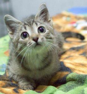 Котёнок-девочка Тигруша