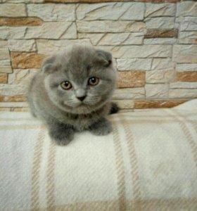 Продаю плюшевых котят.